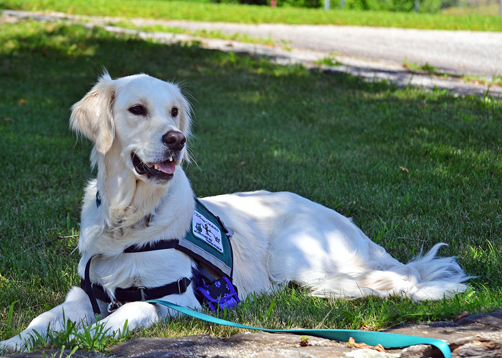 Giving Credit to Service Dogs